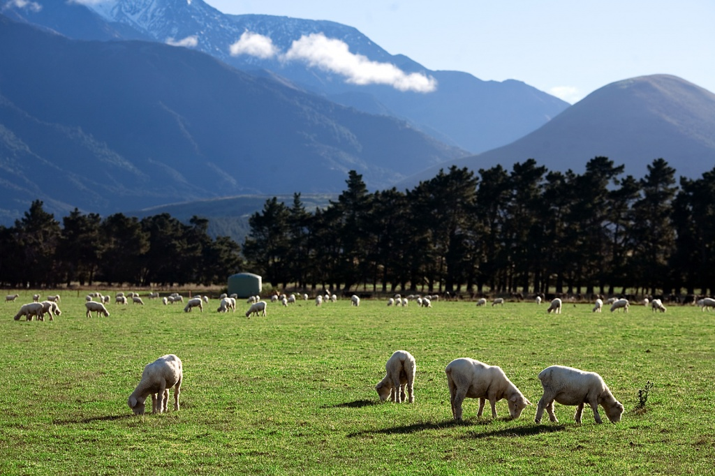 New_Zealand_-_Rural_landscape_-_9795.jpg